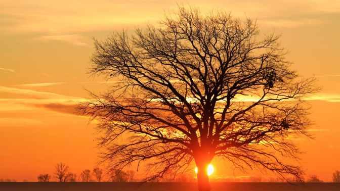 3.10 Einheitlich, in okkagelb gegen die kälte in unserem Land und für mehr Liebe in den Herzen der Menschen…